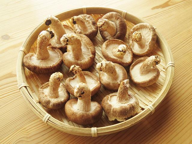 そうだ、干し椎茸を作ろう!栄養たっぷり旨味凝縮!干し椎茸の作り方♪のサムネイル画像