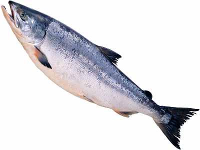 お魚好きにはたまらない!簡単で美味しい鮭の人気レシピ特集☆のサムネイル画像