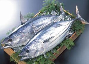 知ってて損ナシ!!鰹の旬と鰹の美味しいレシピ紹介します*のサムネイル画像