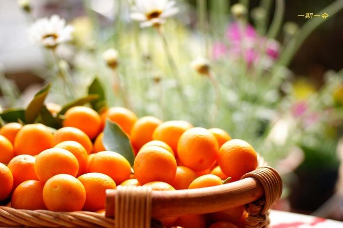 皮も食べれるみかんのような柑橘。金柑のアレンジレシピ6選!のサムネイル画像