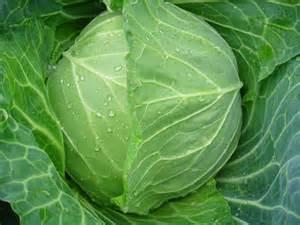 1年中が旬と言えるキャベツだから色んなレシピで美味しく食べよう。のサムネイル画像