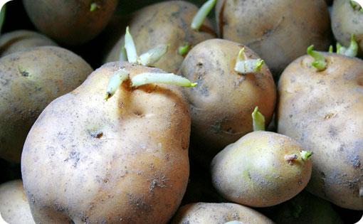 じゃがいもの芽には毒があるって本当?芽が出たら食べられないの?のサムネイル画像