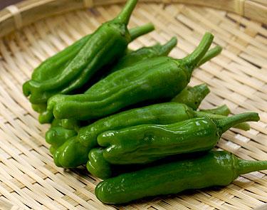夏が旬!ししとうの美味しい食べ方レシピを6つご紹介します!のサムネイル画像
