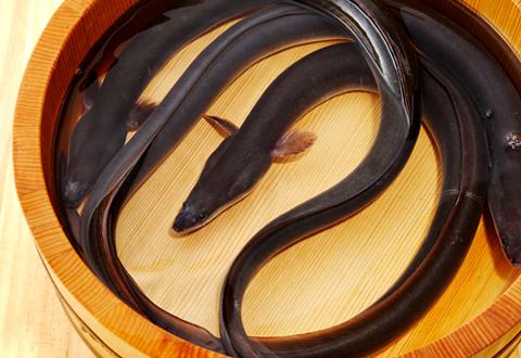 蒲焼、ひつまぶしだけじゃない!うなぎの新定番レシピ候補5選!のサムネイル画像