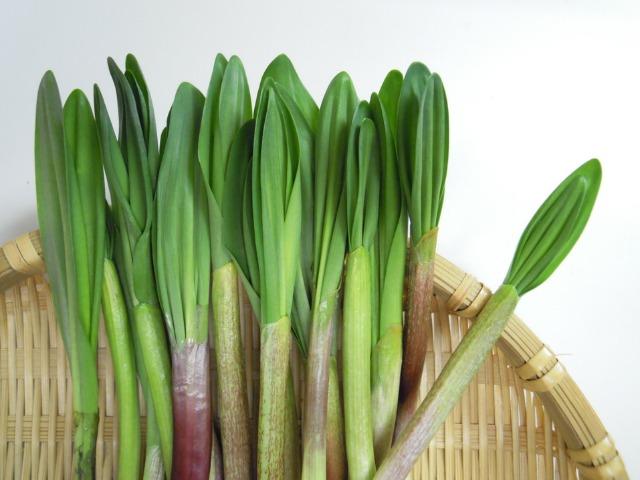 春一番の山の味覚「行者にんにく」で旬のレシピを楽しみませんか?のサムネイル画像