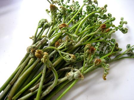 春の味覚「わらび」を食べる!アク抜きの方法とレシピを紹介しますのサムネイル画像
