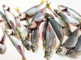 骨まで丸ごと!小あじを美味しく食べるレシピをご紹介します!のサムネイル画像