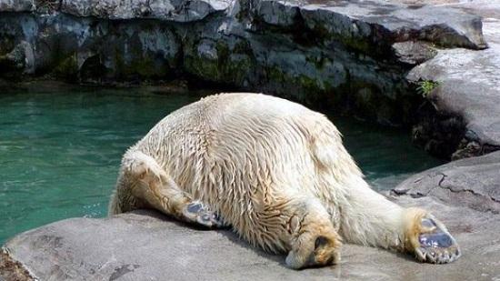【二日酔い】に「効く」!【二日酔い】を「防ぐ」!レシピ5選!のサムネイル画像