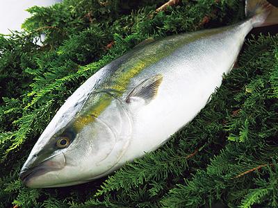 ぶりをいつでも美味しく♪冷凍保存の秘訣とオススメレシピ5選のサムネイル画像