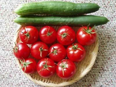 オドロキ!実は食べ合わせの悪いきゅうりとトマトをおいしく食べるのサムネイル画像