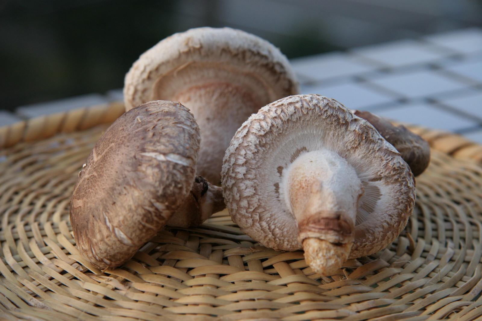 日本キノコ類の代表格しいたけの栄養と他の食材との栄養UPレシピのサムネイル画像