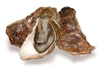 おいしく疲労回復!?海のミルク牡蠣の栄養まるごとレシピ!のサムネイル画像