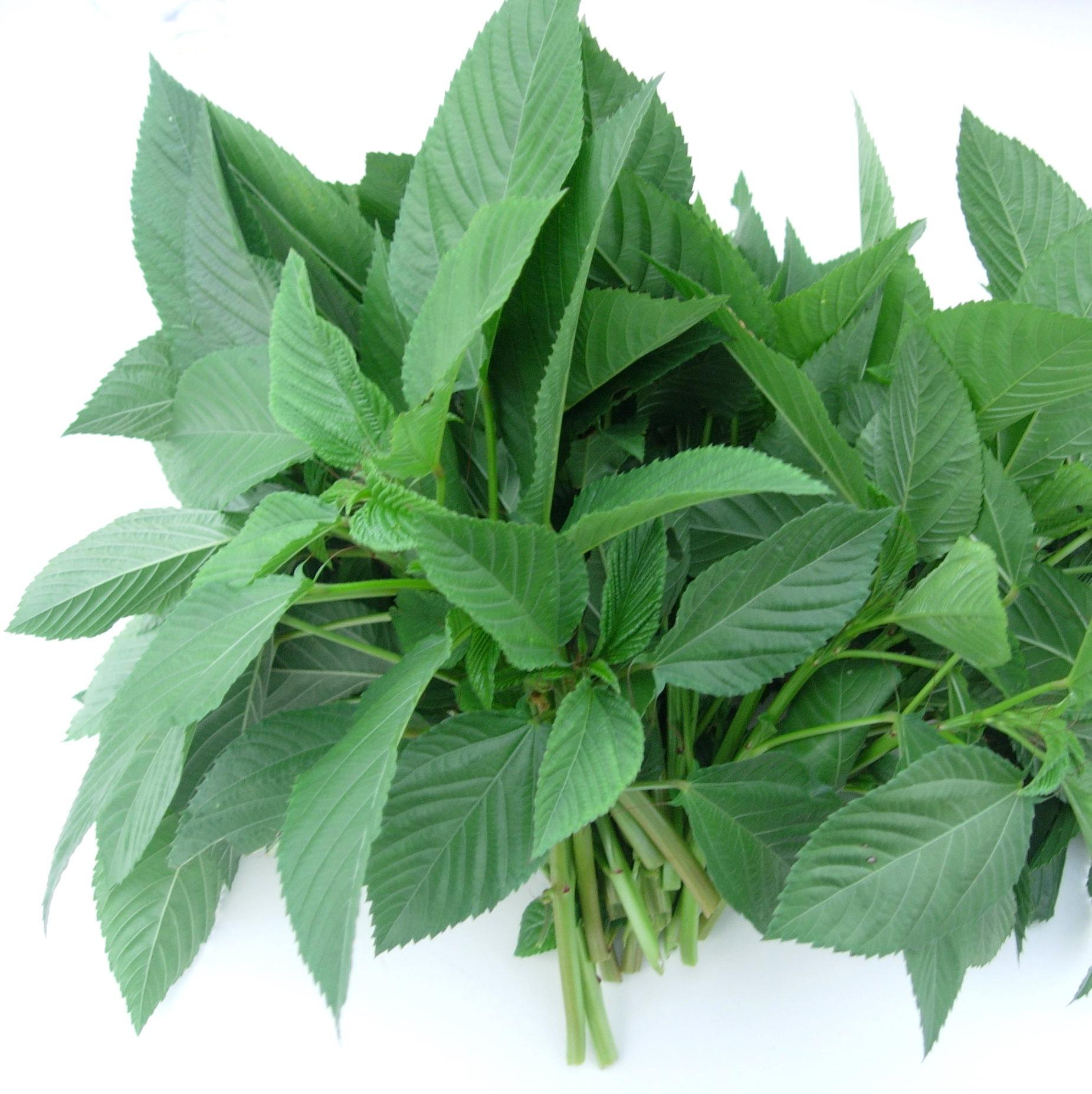 栄養価の高いモロヘイヤde夏バテ防止!スタミナ抜群のおすすめレシピのサムネイル画像