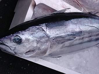 高タンパク低脂肪!優秀な魚かつおの食べやすく美味しいレシピ5選のサムネイル画像