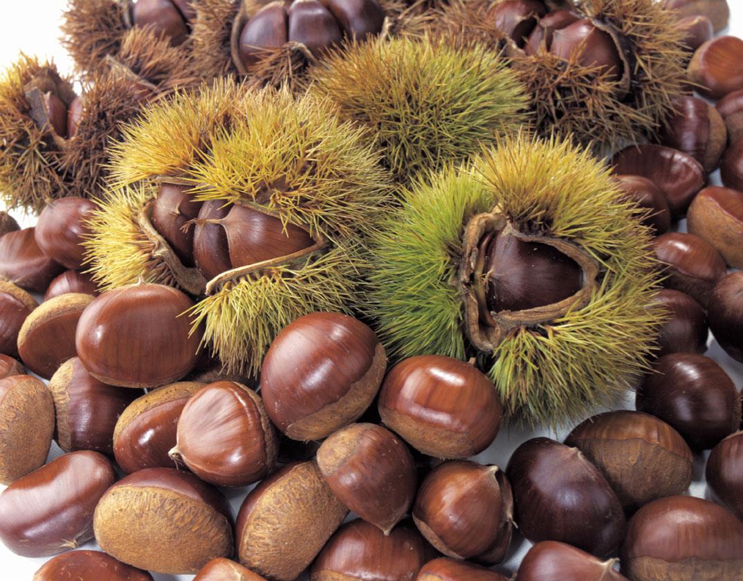 甘くて美味しい秋の味覚♪簡単お手軽♪栗の食べ方レシピ集☆のサムネイル画像