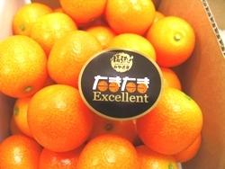 金柑の中で最も美味しい品種『たまたま』その魅力とレシピをご紹介!のサムネイル画像