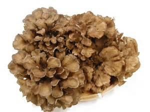 旬の秋に向けて舞茸の料理を予習しよう!舞茸のレシピ集めました。のサムネイル画像